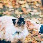 Hur pussla ihop djurägande och personlig frihet?