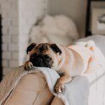 När ditt husdjur blivit sjuk